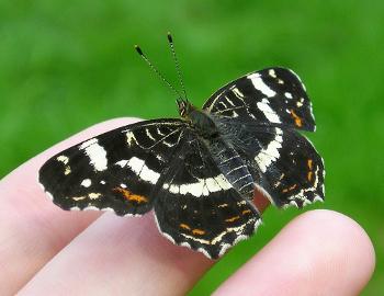 Am 22. Mai ist der Internationale Tag der biologischen Vielfalt ©Maja-Dumat_PIXELIO