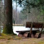 """""""Zukunft Wald – schützen, erleben, nutzen"""" – der Wettbewerb zum deutschen Naturschutzpreis"""