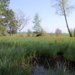 Der 30. Deutsche Naturschutztag findet in Stralsund statt