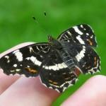 Am 22. Mai ist der Internationale Tag der biologischen Vielfalt