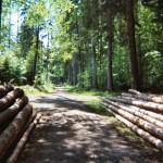 Das FSC-Logo – Garant von Produkten aus verantwortungsvoll bewirtschafteten Wäldern