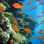 Die REEF CHECK Foundation – Beschützer und Fürsprecher der Korallenriffe